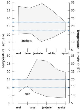 Optimums métaboliques de l'anchois et de la sole