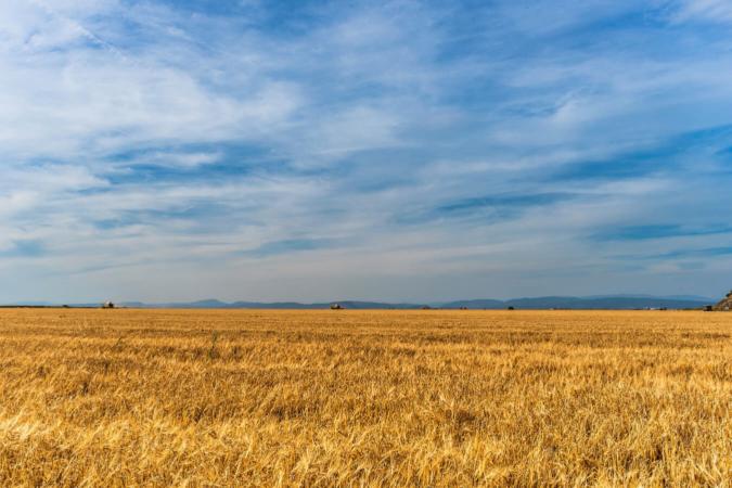 Pas de place pour les auxiliaires : champ libre pour les bioagresseurs