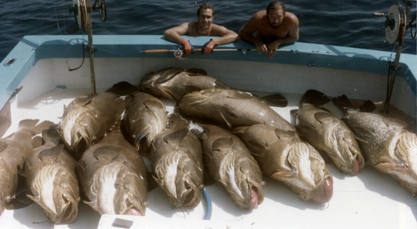 Pêche au Mérou géant