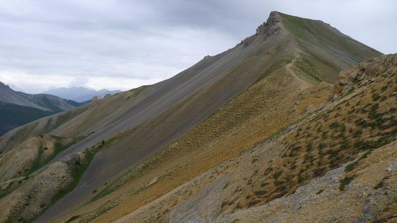 Pelouse alpine dégradée dans le Queyras