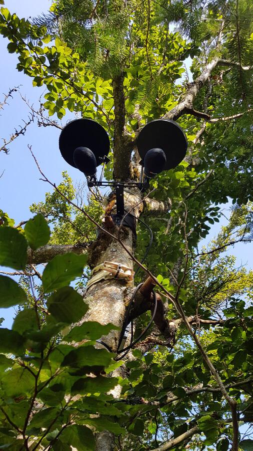 Perchée dans les arbres à un endroit soigneusement sélectionné, la captation sonore est aussi un art