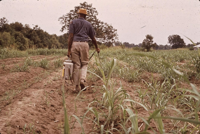 Pesticides naturels