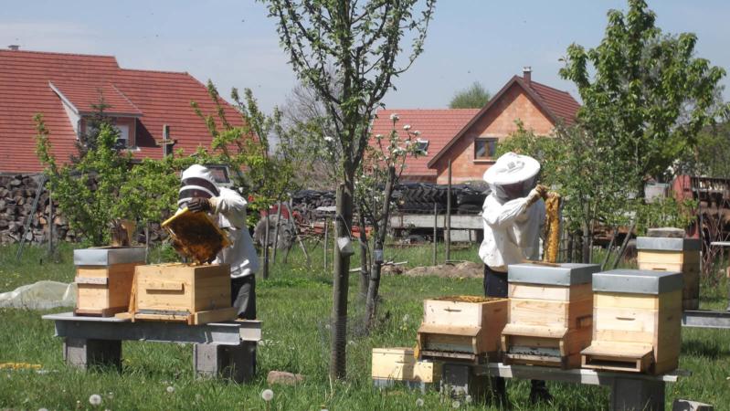 Petit moment d'apiculture en famille