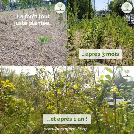 Plantation de forêt Miyawaki à Paris par l'association Boomforest - évolution dans le temps