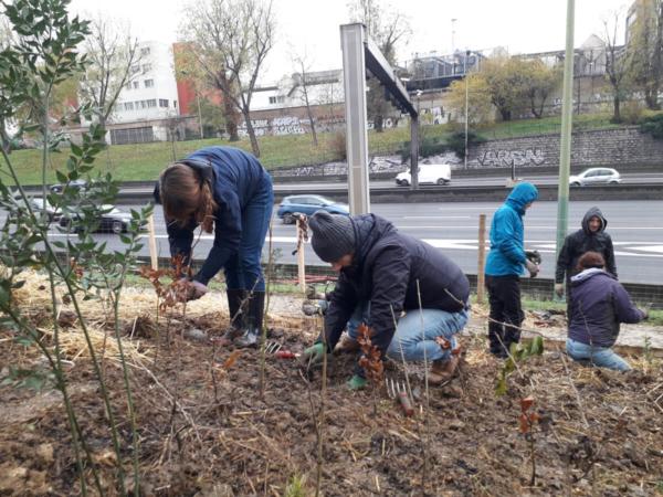 Plantation de jeunes plants, à Paris