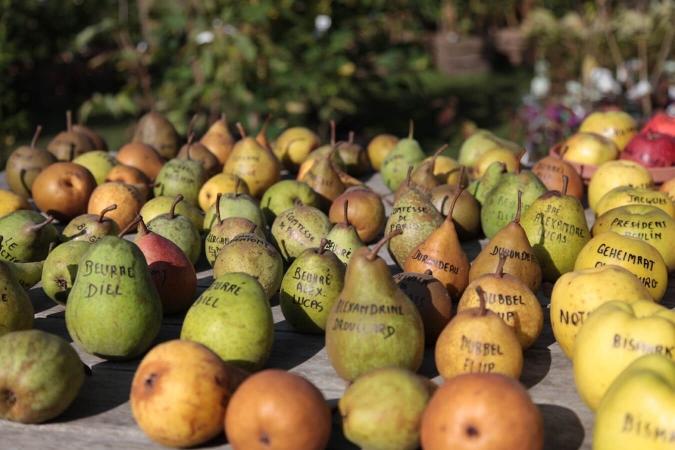 Pommes et poires de différentes variétés