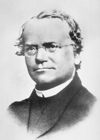 Portrait de Gregor Mendel