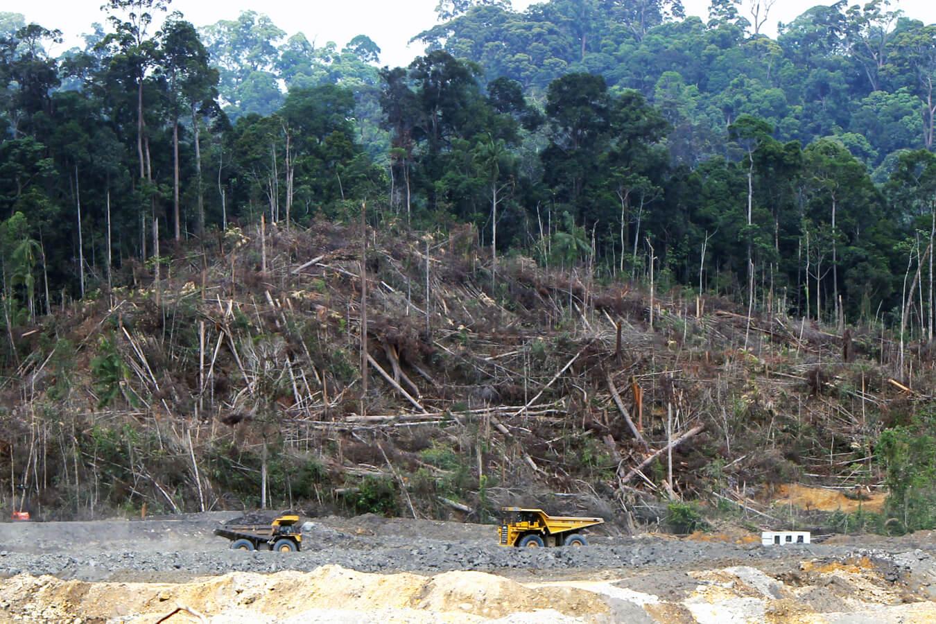 Quand Bornéo disparait
