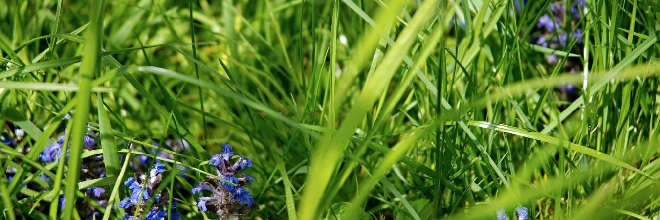 Quand l'herbe pousse, les fleurs suivent.