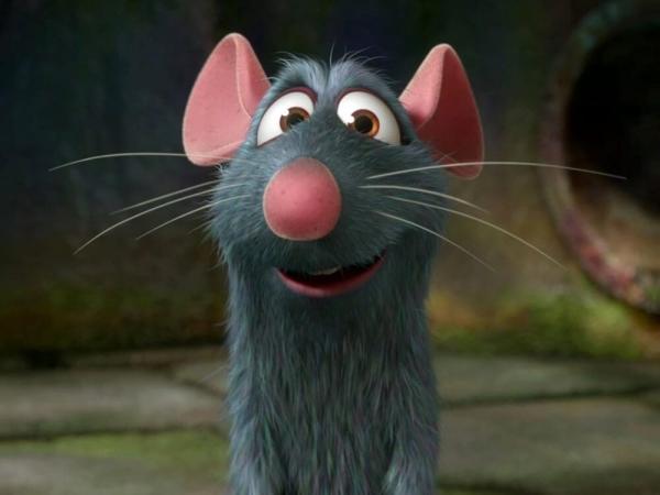 Qui a dit que les rats ne sont pas sympathiques ?