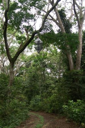 Remote Canopy Trap, inspiré par Gavin Svenson, piège aérien, avec attraction par la lumière. Ici à Nyonié, Gabon 2017