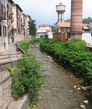 Renouée du Japon ayant colonisée un cours d'eau en pleine friche industrielle