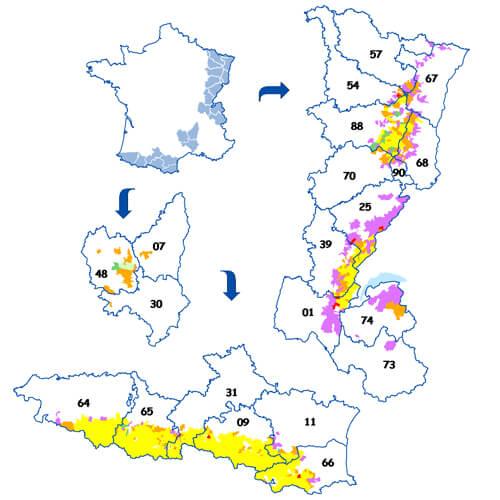 Repartition communale du Grand Tétras en 2009. En Jaune : aire de présence régulière de l'espèce - En Rouge , rose et orange : Aires de présence anciennes - En vert : secteurs de recolonisation