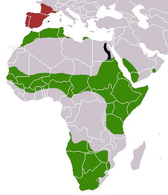 Répartition de la genette commune (Genetta genetta) à travers le monde