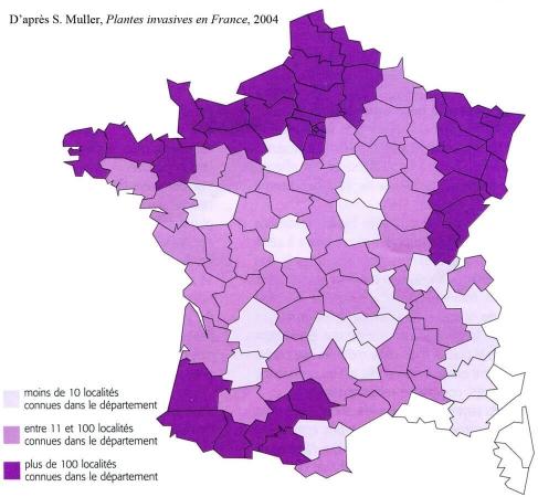 Répartition de la renouée du Japon en France en 2004
