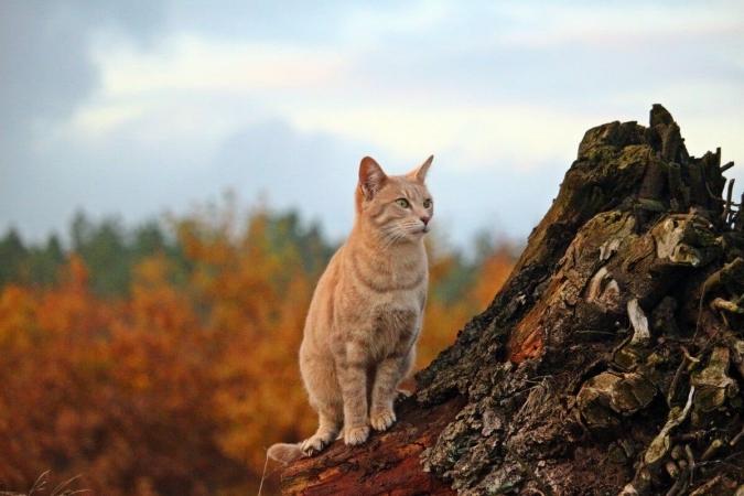 Roux comme l'automne, ce chat n'est pourtant pas à sa place…