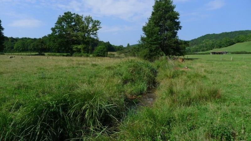 Ruisseau habité par des Campagnols amphibies