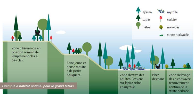 Saisonnalité de l'utilisation de l'habitat forestier par le Grand Tétras selon son cycle biologique. Ce schéma traduit d'une grande différence dans l'habitat utilisé et les ressources consommées entre l'hiver et l'été.