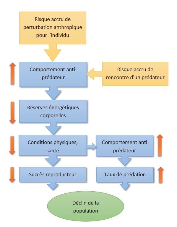 Schéma montrant que le dérangement ajoute des effets de stress à ceux de la prédation. Pour Frid & Dill (2002) ces deux types d'effets sont comparables : tous deux induisent des stratégies anti-prédateurs coûteuses en temps et en énergie, ce qui diminue l'espérance de vie de l'animal.