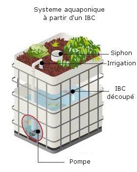 Dchéma d'un système aquaponique