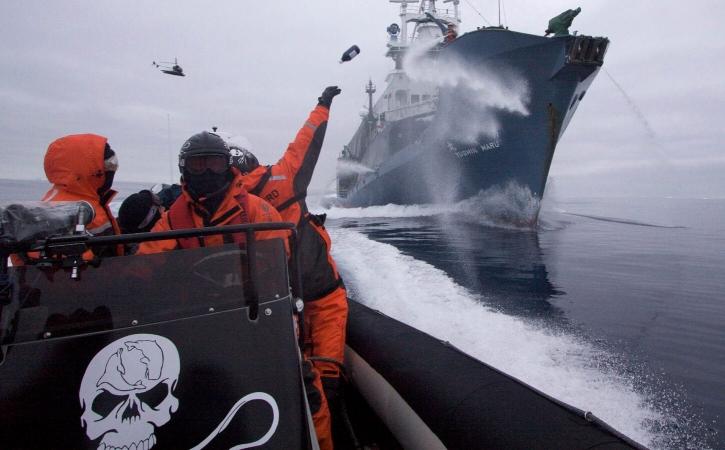 Il existe plusieurs manières de soutenir Sea Shepherd, même si vous n'avez pas le pied marin !