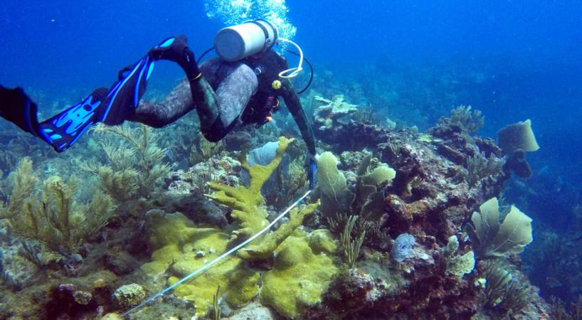 Suivi des mérous le long de transects sous-marins