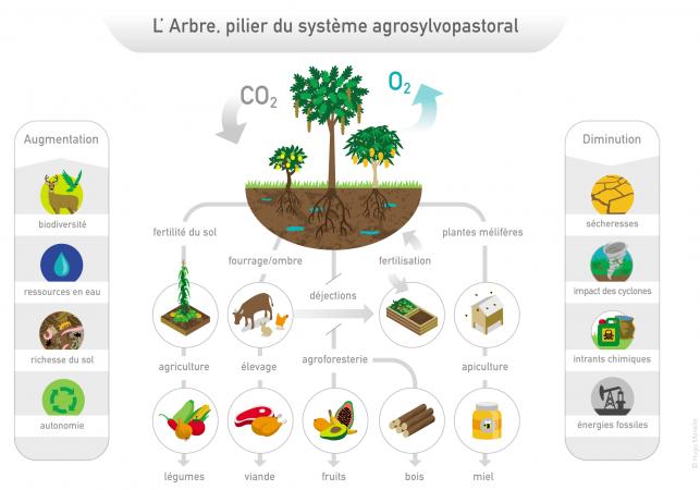 Le rôle primordiale de l'arbre au Yucatan