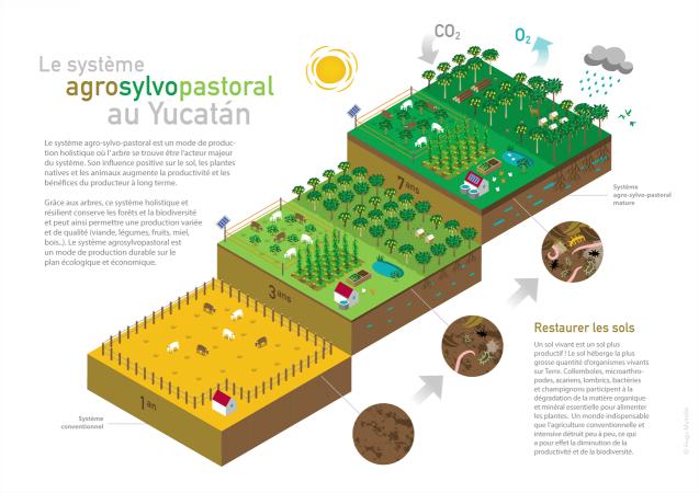Le système agro-sylvo-pastoral en infographie