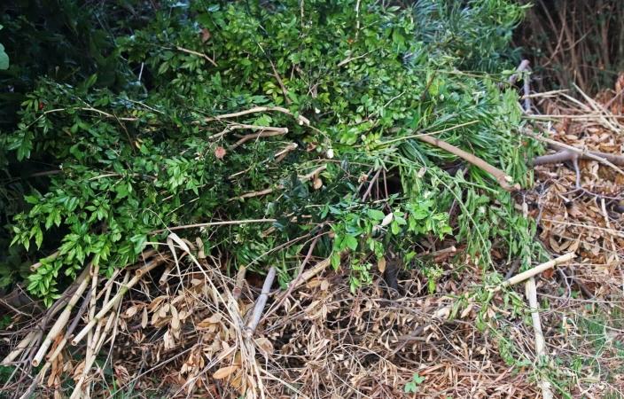 Tas de branchages qui pourrait très bien convenir à un hérisson pour venir y passer l'hiver