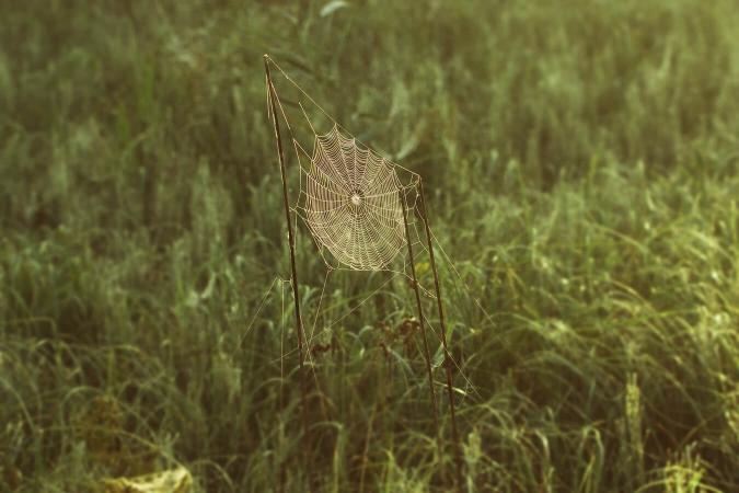 Toile d'araignée en plein champ