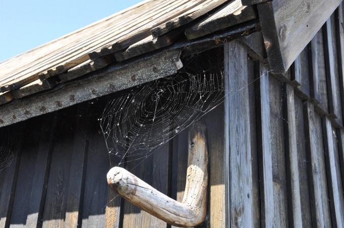 Toile d'araignée sur maison