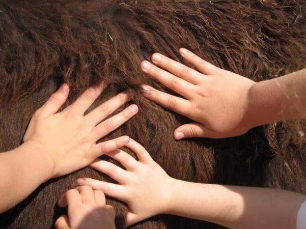 Toucher des poils pour mieux comprendre