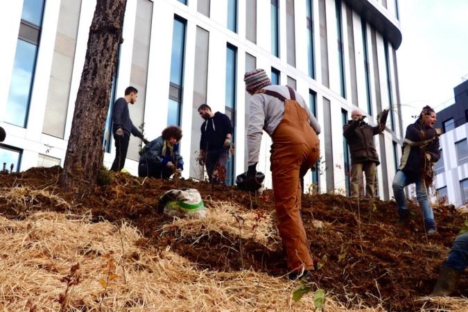Travail collectif de plantation et paillage d'arbres
