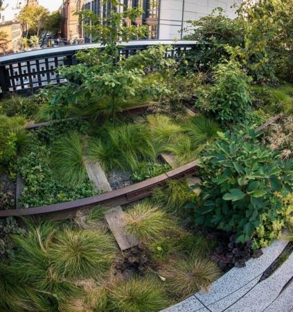 Trouver l'espace pour laisser la biodiversité s'exprimer est un enjeu fondamental comme ici à New York sur la fameuse High Line