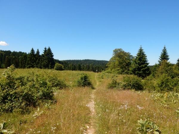 Un beau champ de Gentiane qui donne envie de rester sur le chemin pour les laisser en paix