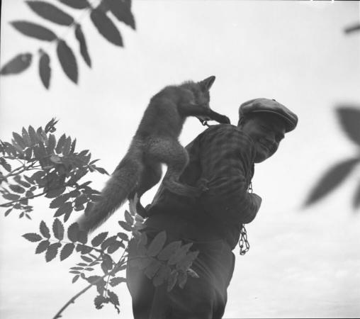 Un trappeur et son renard