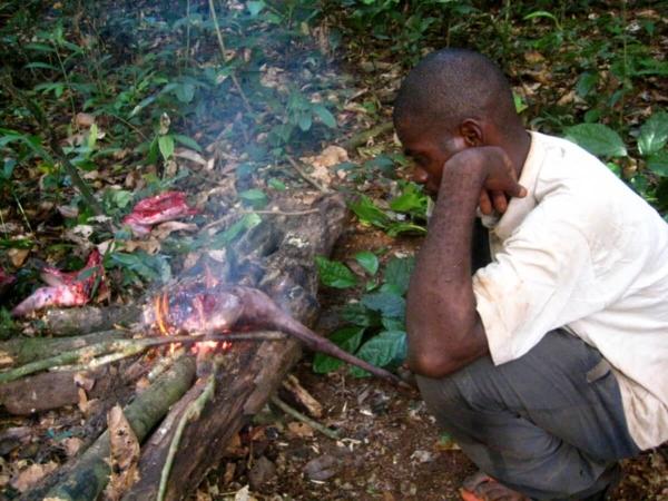 Une ressource à portée de main pour les forestiers