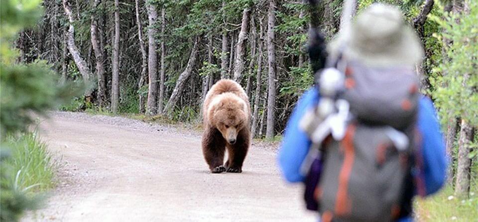 Une situation exceptionnelle justifie-t-elle une chasse systématique ?