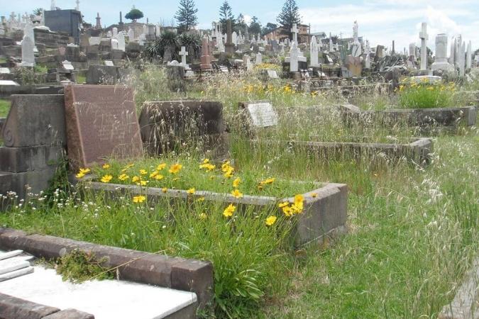 Végétation spontanée en cimetière