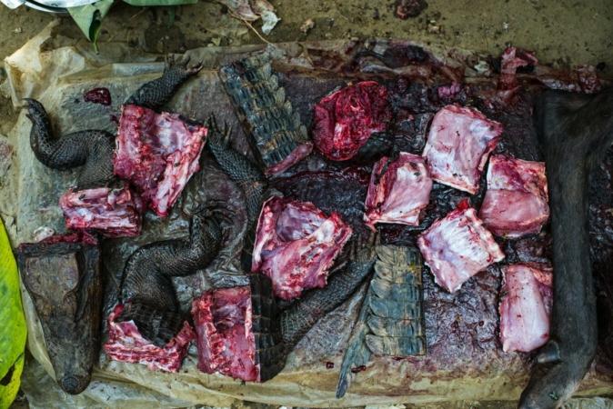Viande de brousse (crocodile et antilope) au marché Moutuka Nunene à Lukolela en République démocratique du Congo