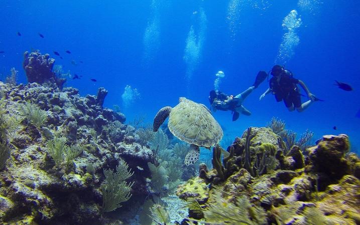 Visite d'une aire de repos pour tortues marine
