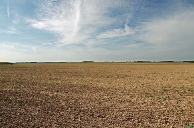 Voila à quoi ressemble un champ de maïs au plus fort du printemps. A choisir…